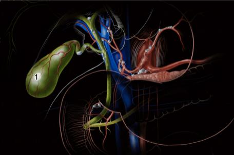 schema-vesicule-docteur-desantis-chirurgie-viscerale-digestive-proctologie-nice